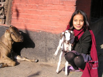 nepal_goat_sheep_226127